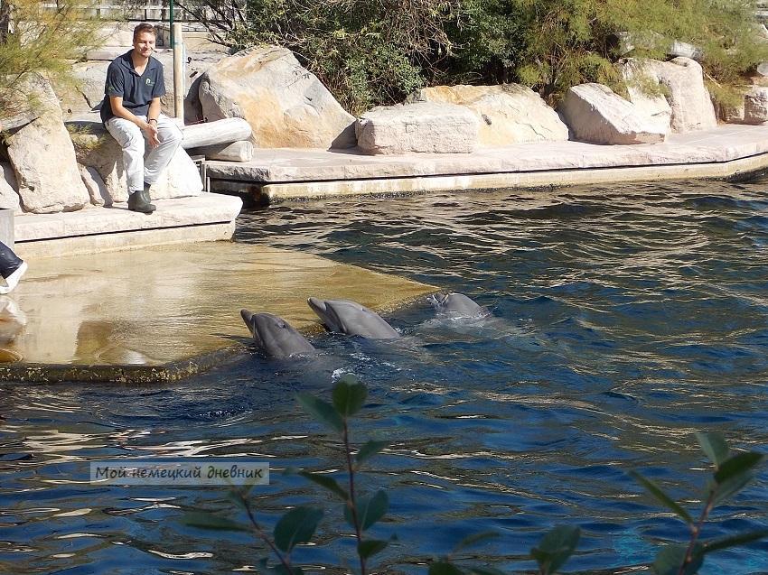дельфинарий нюрнберг