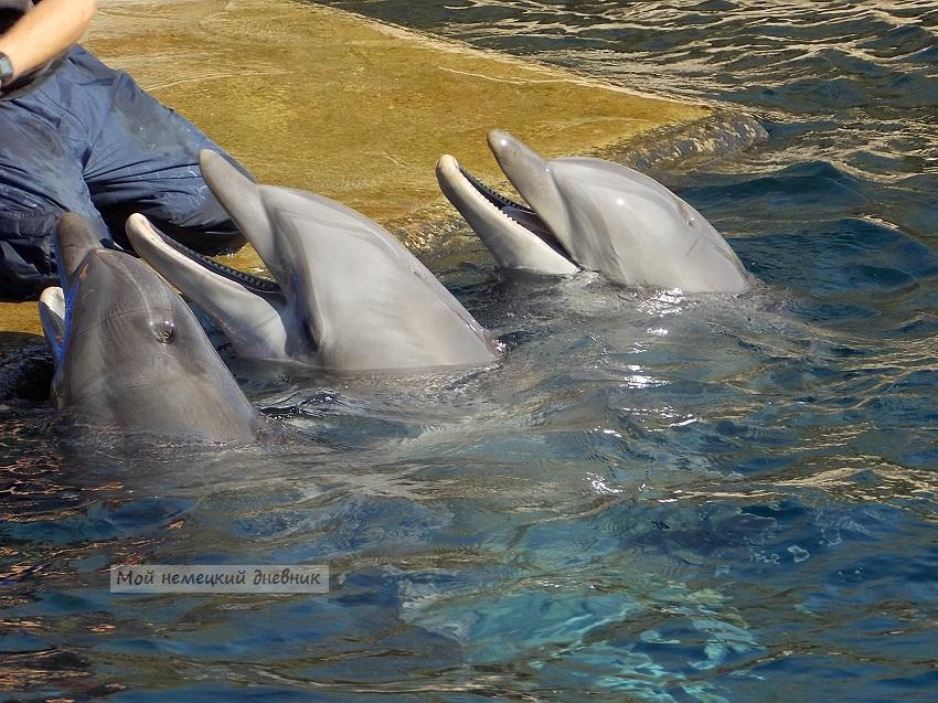 дельфинарий нюрнберг, нюрнберг что посмотреть,