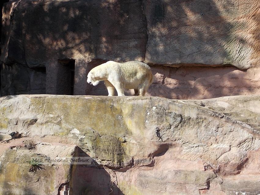 зоопарк нюрнберг, нюрнбергский зоопарк цена, дельфинарий нюрнберг, нюрнберг что посмотреть, nuremberg zoo, нюрнберг достопримечательности, zoo nürnberg,